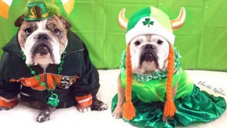 23 Dogs Ready For Saint Patrick's Day! [GALLERY]