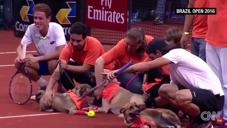 Organizers and players sit on the court with the dogs.