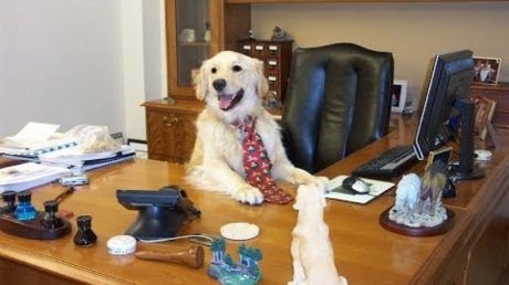 Why We Should All Bring Our Dogs To Work