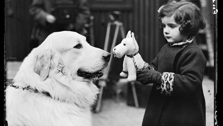 A little girl holds a stuffed dog next to a real dog at a Cruft's show in 1937.