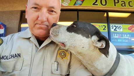 Police Officer Selfies With Lost Pit Bull Are Adorable
