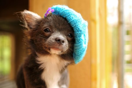 23 Adorable Dogs In Hats [GALLERY]