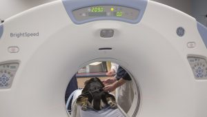 MRI Scans Prove Dogs Can Read Emotions On Your Face