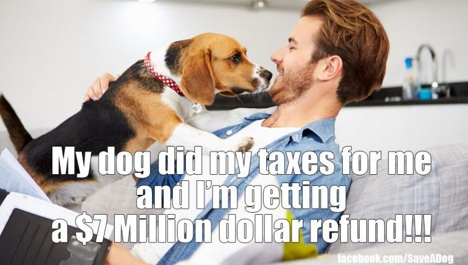 """dog sniffs man, caption says """"my dog did my taxes for me and Im getting a $7 million dollar refund!!!"""""""