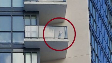 Facebook Users Come Together To Save A Freezing Dog Trapped On A Balcony