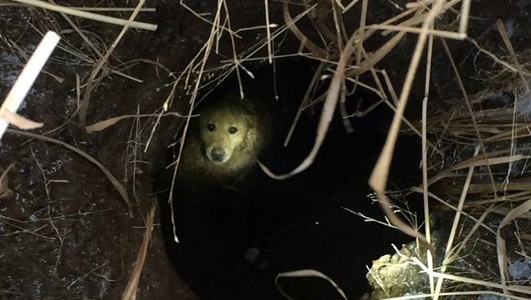 A Golden Retriever is visible at the bottom of a deep sinkhole.