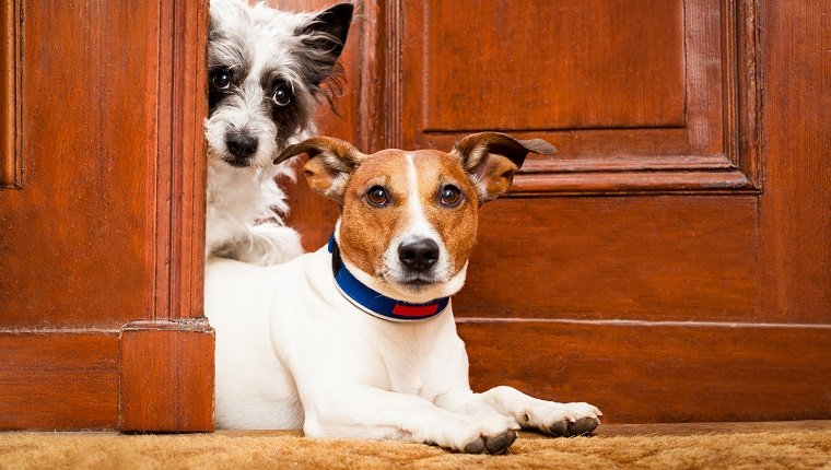 """Two dogs poke their heads through a cracked door with expressions that seem to say, """"Oh my."""""""