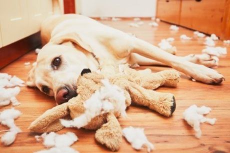 How To Stop Dogs From Destructive Chewing