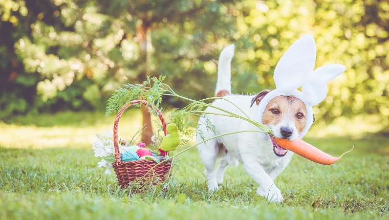 Jack Russell Terrier dog next to basket with traditional Easter symbols