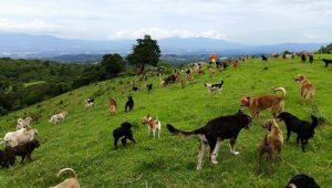 """Land of the Strays"" Is An Outdoor Sanctuary For Adoptable Dogs In Costa Rica"