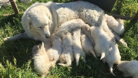 A Litter Of 17 Puppies May Be The Largest In California's History