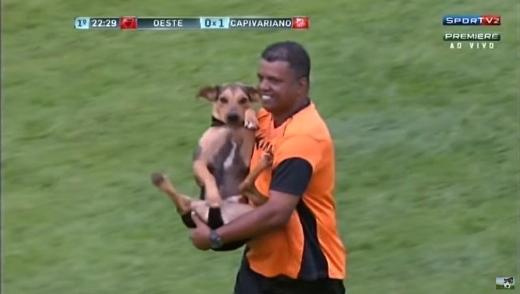 A referee carries the dog off the field.