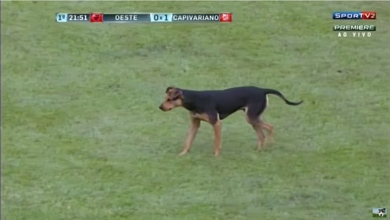 A dog walks on a soccer field.