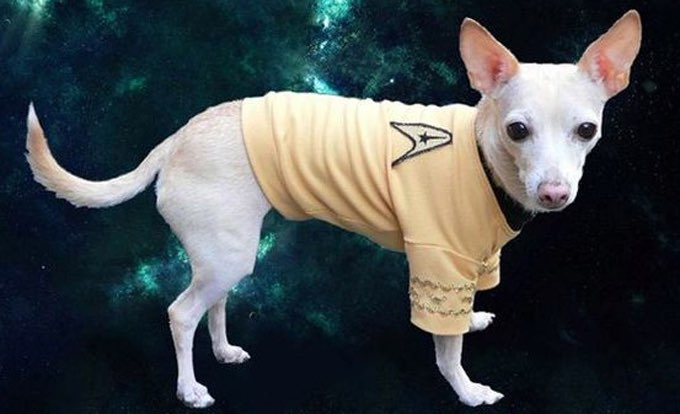 20 Dogs Who Love Star Trek [PICTURE GALLERY] - Dogtime American Water Spaniel Dogtime