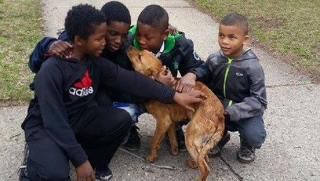 Four Boys Rescue A Dog Who Was Abandoned And Tied To A Vacant House