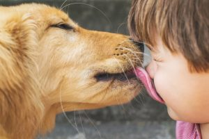 Dog Licking And What It Means