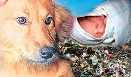 Dog Saves Baby From Dump In Thailand – Honored By Red Cross