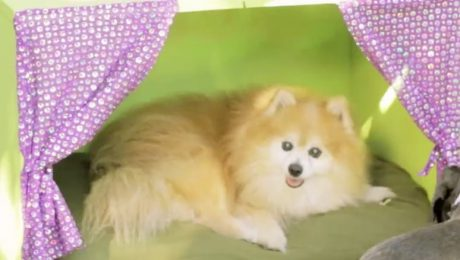 National Craft Month: Make A DIY Dog Bed With An Old Toy Box Or Chest [VIDEO]