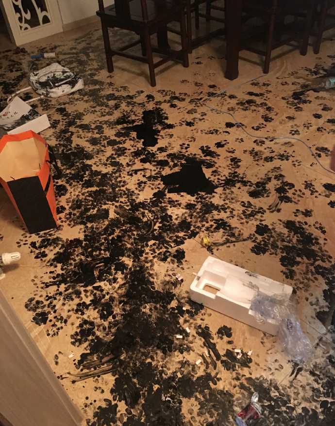 Paw prints cover the floor and several objects