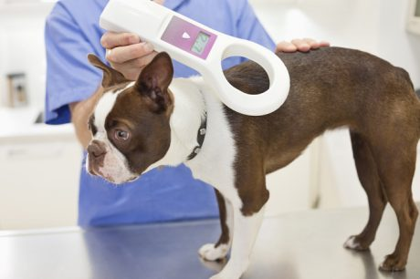Your Dog's Microchip: 5 Important Facts You May Not Have Known