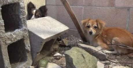 Fearful Breeding Dogs Dumped On The Street By Their Owner [VIDEO]