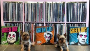 The Vinyl Yorkies On Instagram Are An Audiophile's Dream Dogs