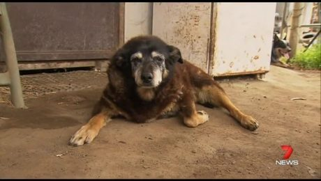 World's Oldest Dog Dies Peacefully At Age 30