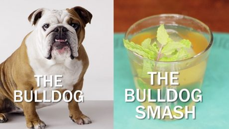 The Bulldog Smash Cocktail Recipe For Bully Lovers [VIDEO]