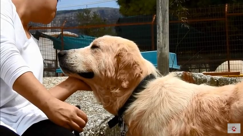 dog-rescued-greece