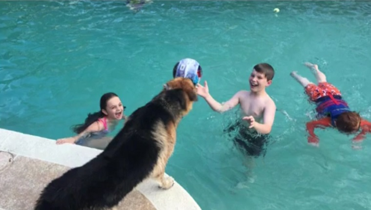 Haus plays by the pool with the kids
