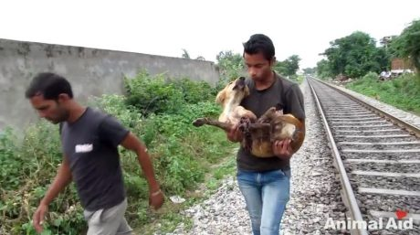 Dog Recovers From Being Hit By A Train [GRAPHIC VIDEO]