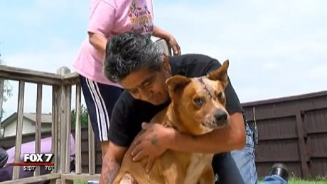 Man Ignores Injuries To Search For His Missing Dog After A Car Accident