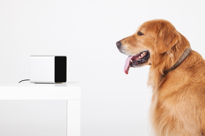 petcube-review-dogtime
