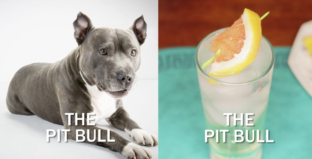 pit-bull-cocktail
