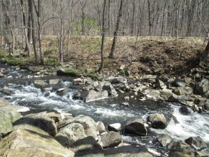 Man Killed Trying To Save His Dog From Swift-moving Creek
