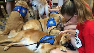 Comfort Dogs Fly In From Across The Country To Help Orlando Shooting Survivors