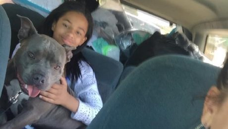 Breed Ban Takes Emotional Support Pit Bull Dog Away From Girl With Asperger's