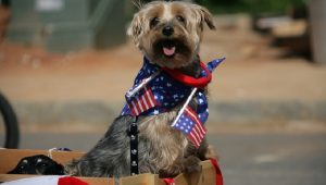 30 Patriotic Dogs Celebrating The Fourth Of July [GALLERY]