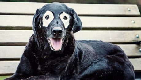 No, This Dog's Face Isn't Painted To Look Like That