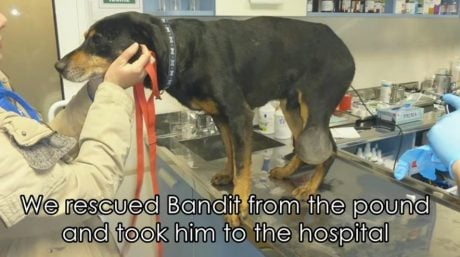 Senior Dog With Tumor Rescued From Romanian Pound