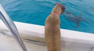 Dog Sees Dolphins For The First Time And Dives Right In To Swim With Them