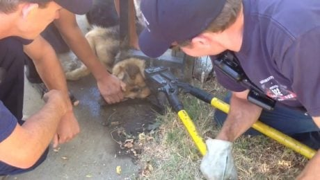 Firefighters Cut Through Fence To Free A Stuck German Shepherd Dog's Head