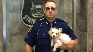 "Police ""Adopt"" A Goldendoodle Pup They Rescued From A Rollover Car Crash"