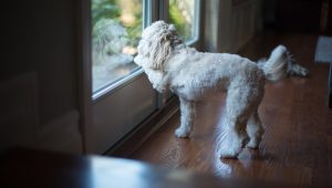 10 Tips To Insure You Never Lose Your Dog