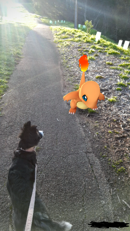 A dog spots a Pokemon on a walk.