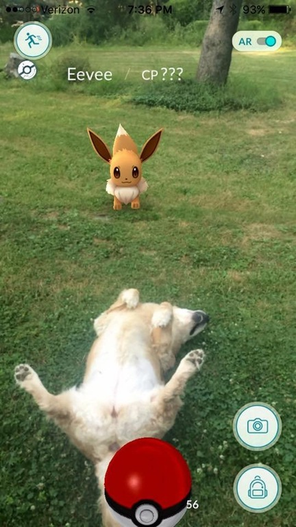 A dog rolls over in front of a Pokemon