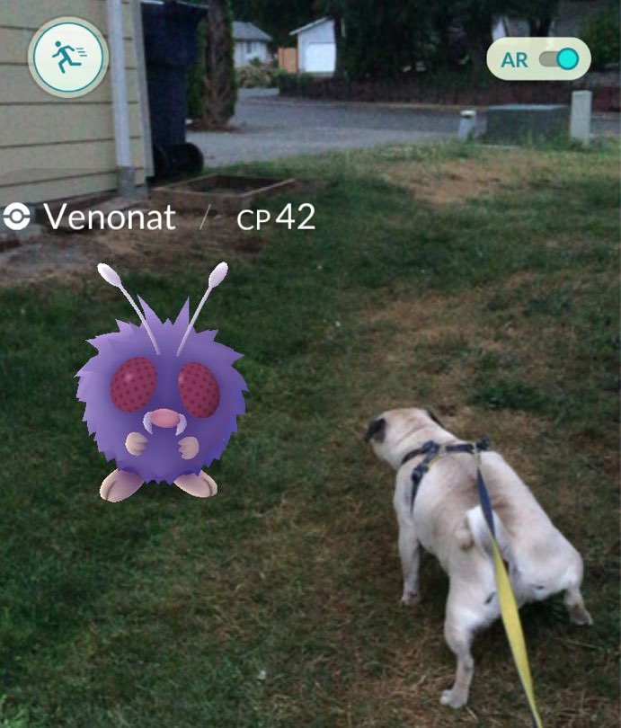 pokemon-go-dog-pug