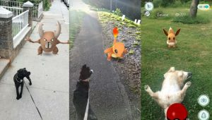 7 Pokemon GO Dog Walking Safety Tips