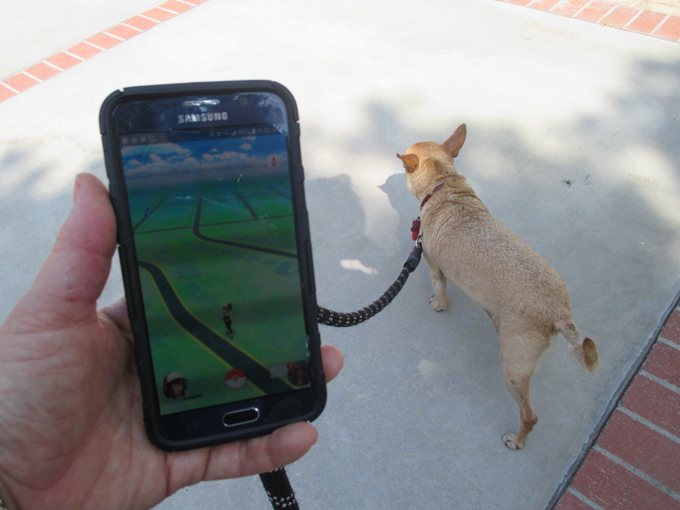 pokemon-go-dogs