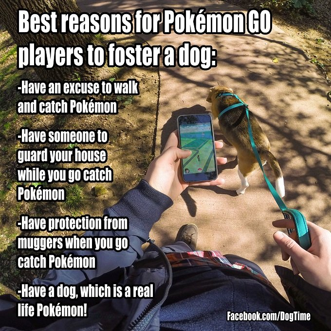 pokemon-go-foster-dogsmall